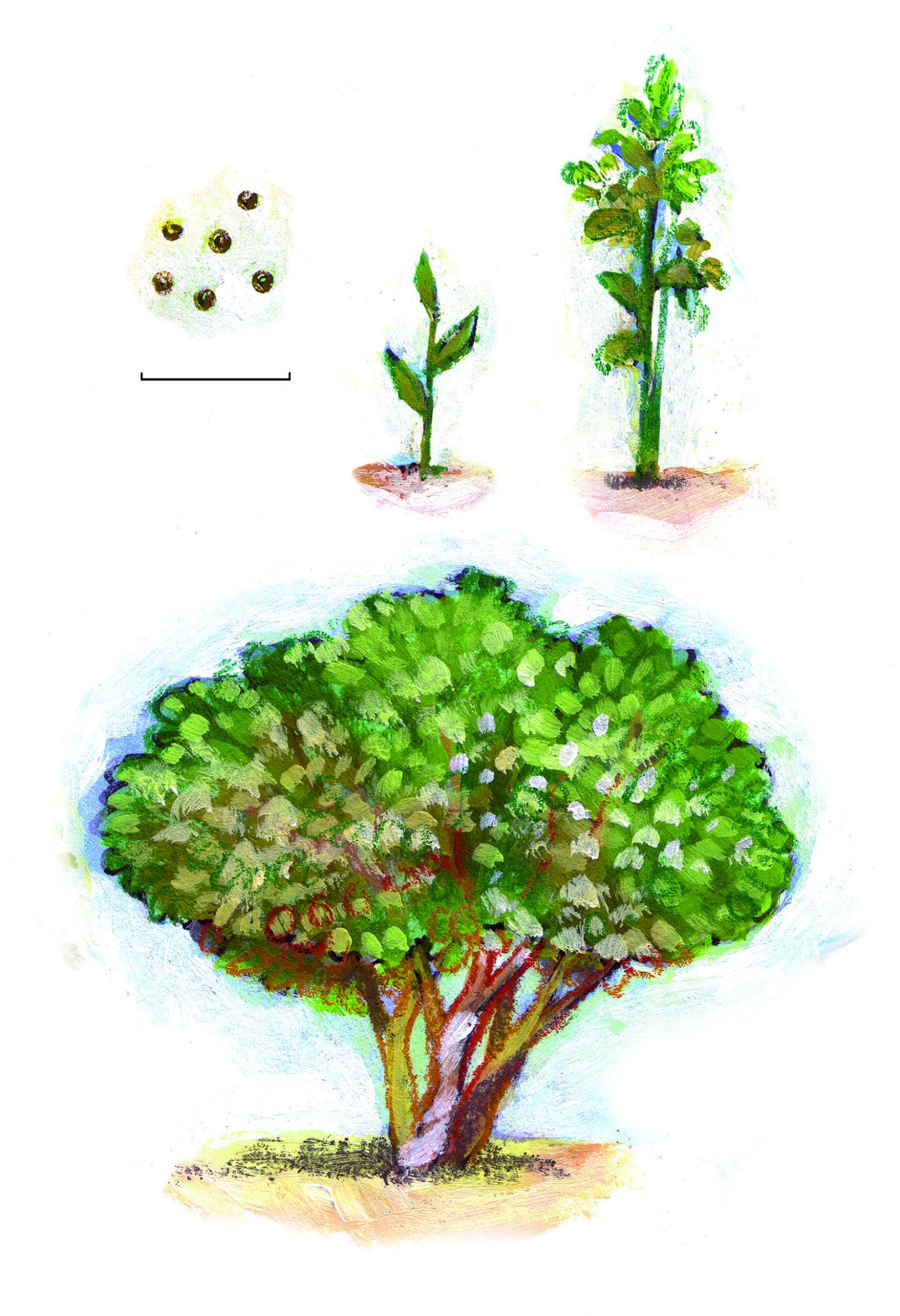 Mosterdzaadjes – Het piepkleine zaadje