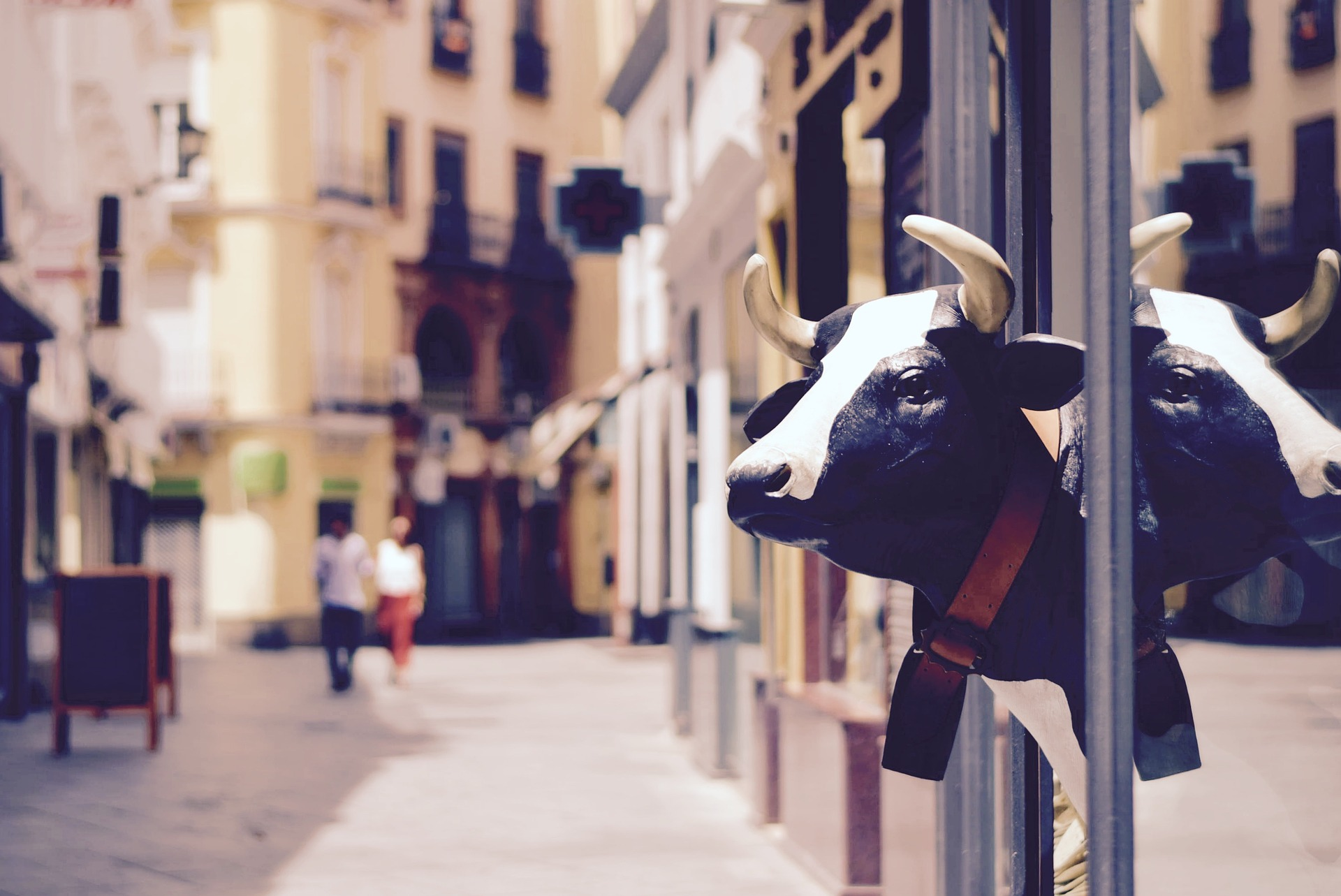 Een koe in de stad
