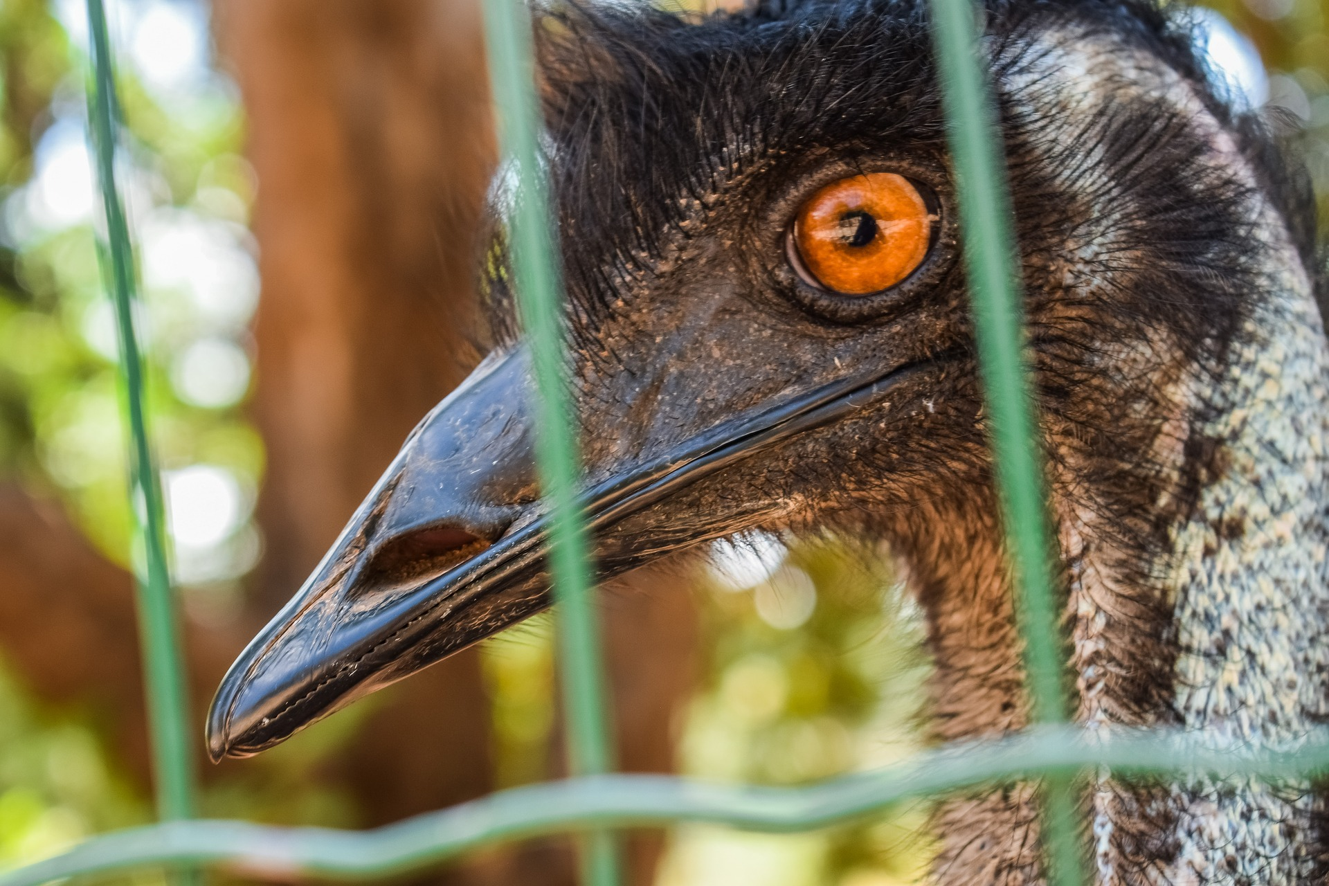 Vogeltje gij zijt gevangen