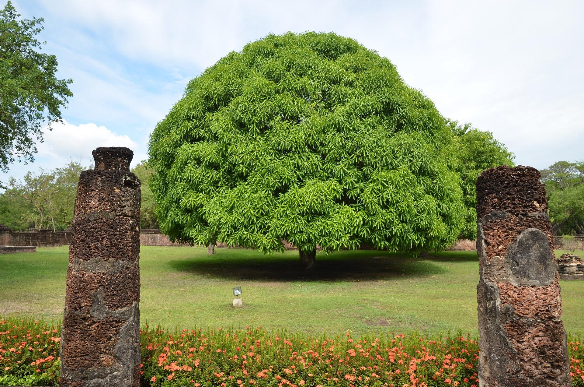 Bidden bij een boom
