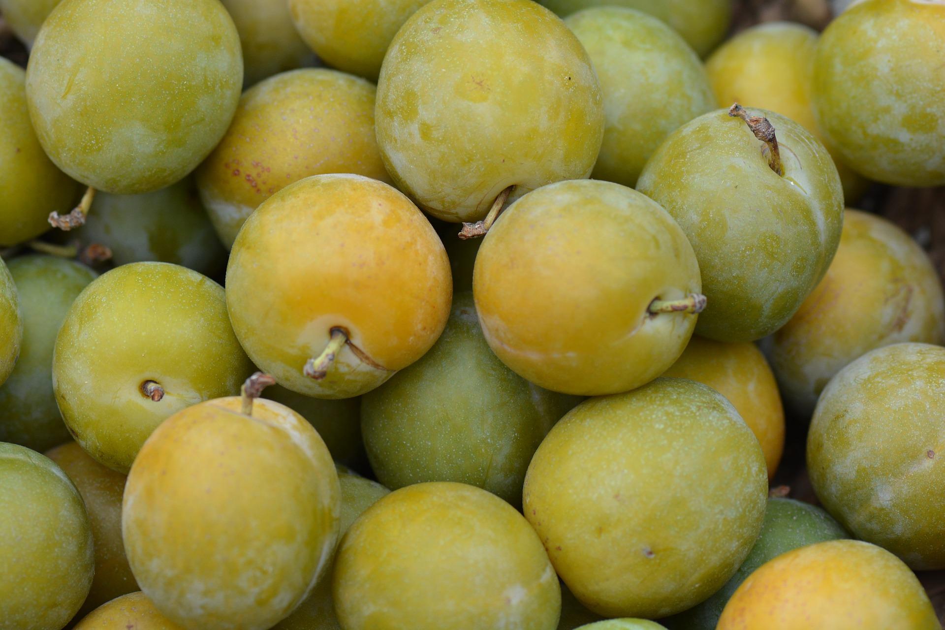 De ideale vrucht